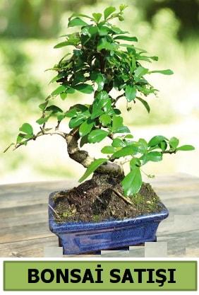 Çam bonsai japon ağacı satışı  Kayseri çiçek çiçekçi mağazası