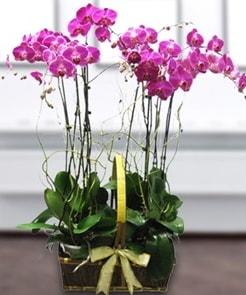 7 dallı mor lila orkide  Kayseri çiçek çiçek satışı