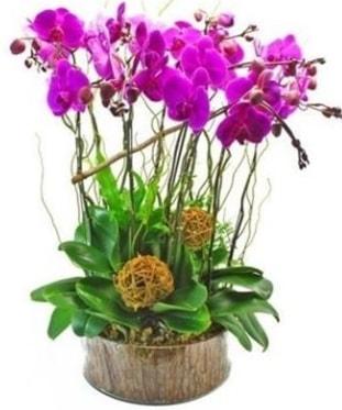 Ahşap kütükte lila mor orkide 8 li  Kayseri çiçek online çiçek gönderme sipariş