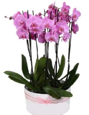 Beyaz seramik içerisinde 7 dallı mor orkide  Kayseri çiçek hediye çiçek yolla
