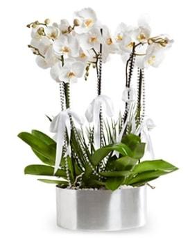 Beş dallı metal saksıda beyaz orkide  Kayseri özvatan çiçek çiçek , çiçekçi , çiçekçilik