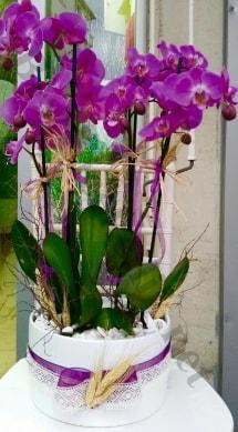 Seramik vazoda 4 dallı mor lila orkide  Kayseri çiçek 14 şubat sevgililer günü çiçek
