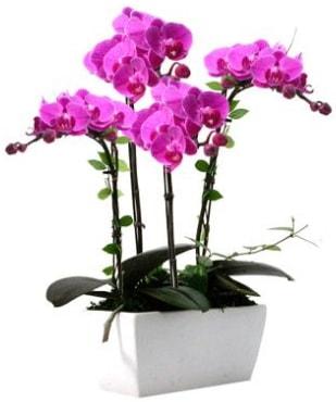 Seramik vazo içerisinde 4 dallı mor orkide  Kayseri çiçek çiçekçi mağazası
