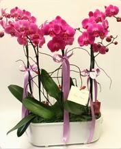 Beyaz seramik içerisinde 4 dallı orkide  Kayseri çiçek internetten çiçek satışı