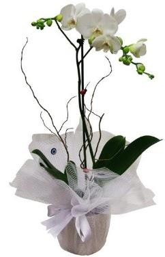 Tek dallı beyaz orkide  Kayseri çiçek anneler günü çiçek yolla