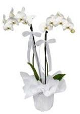 2 dallı beyaz orkide  Kayseri kocasinan çiçek İnternetten çiçek siparişi
