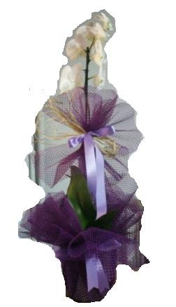 Tek dallı beyaz orkide süper kalite ithal  Kayseri çiçek çiçek siparişi vermek