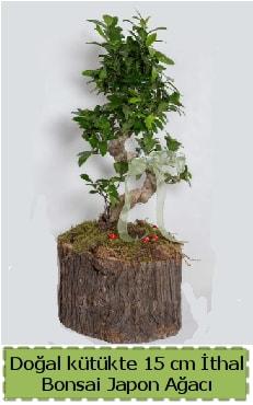 Doğal kütükte İthal bonsai japon ağacı  Kayseri çiçek ucuz çiçek gönder