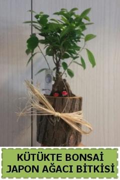 Kütük içerisinde doğal bonsai ağacı  Kayseri çiçek hediye çiçek yolla