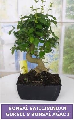S dal eğriliği bonsai japon ağacı  Kayseri çiçek çiçekçi mağazası