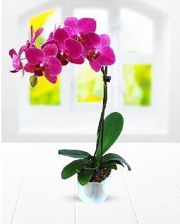 Tek dallı mor orkide  Kayseri çiçek çiçekçi mağazası
