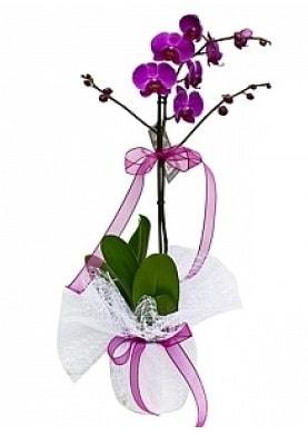 Tekli Mor Orkide  Kayseri özvatan çiçek çiçek , çiçekçi , çiçekçilik