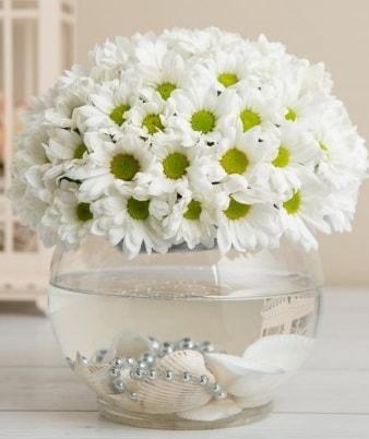 Fanusta beyaz Papatya  Kayseri çiçek çiçekçi mağazası
