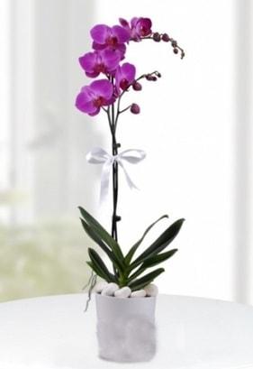 Tek dallı saksıda mor orkide çiçeği  Kayseri çiçek cicek , cicekci