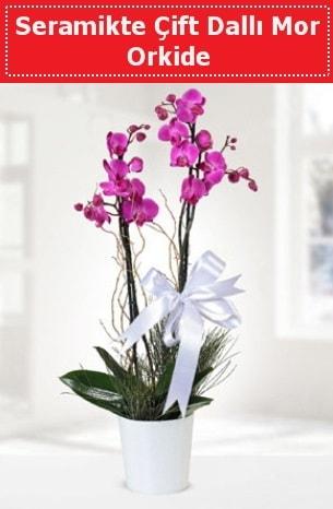 Seramikte Çift Dallı Mor Orkide  Kayseri çiçek çiçek mağazası , çiçekçi adresleri