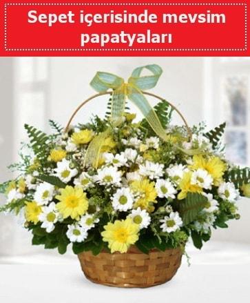 Sepet içerisinde mevsim papatyaları  Kayseri çiçek internetten çiçek satışı