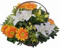 Kayseri melikgazi çiçek çiçek yolla  sepet modeli Gerbera kazablanka sepet